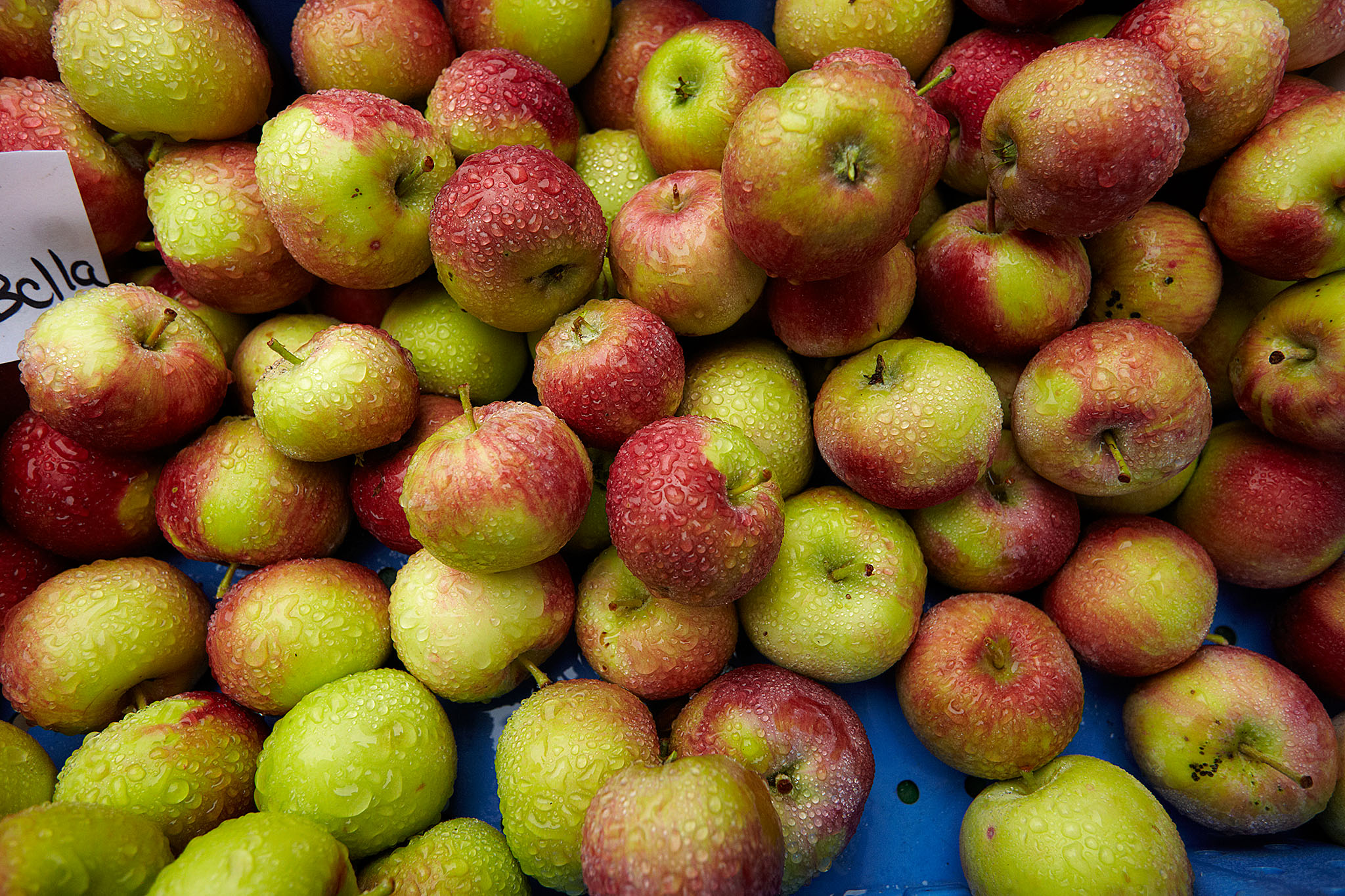 Green City Market - Apples