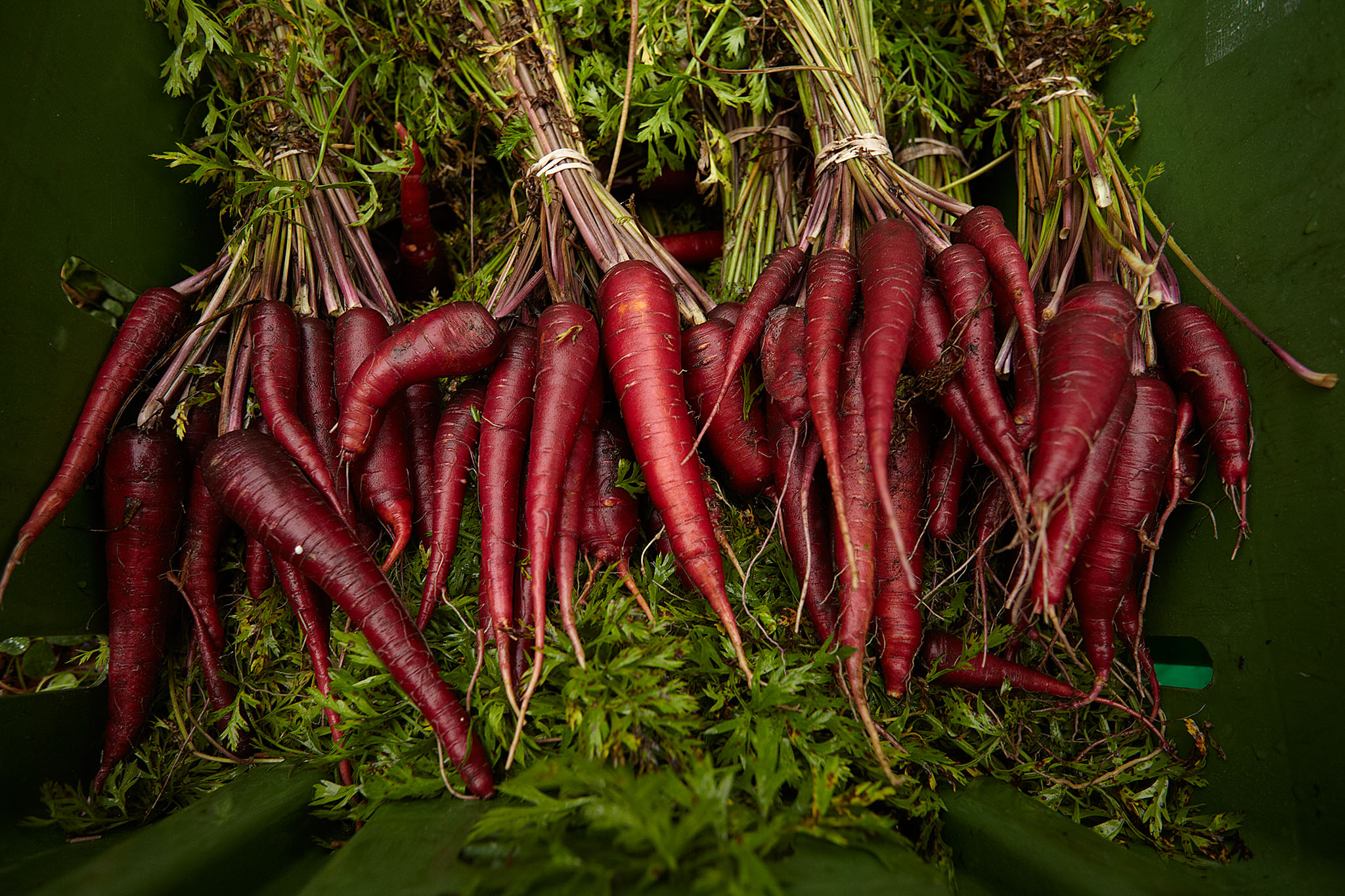 Green City Market - Purple Carrots